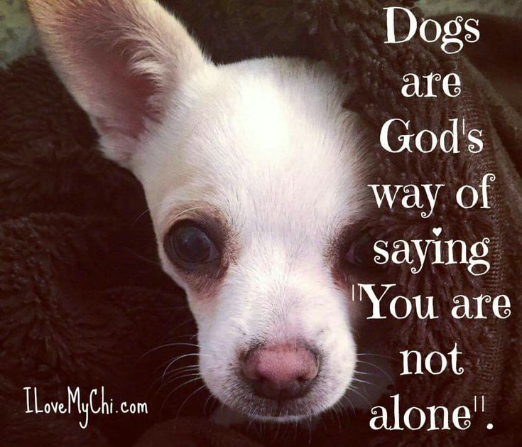 "Dogs are God's way of saying ""You are not alone."""