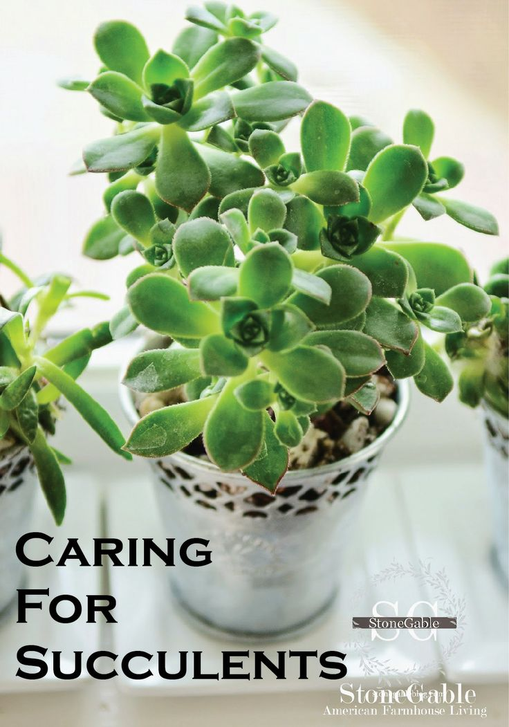 15 best images about house plants on pinterest types of for Easy garden plants to take care of