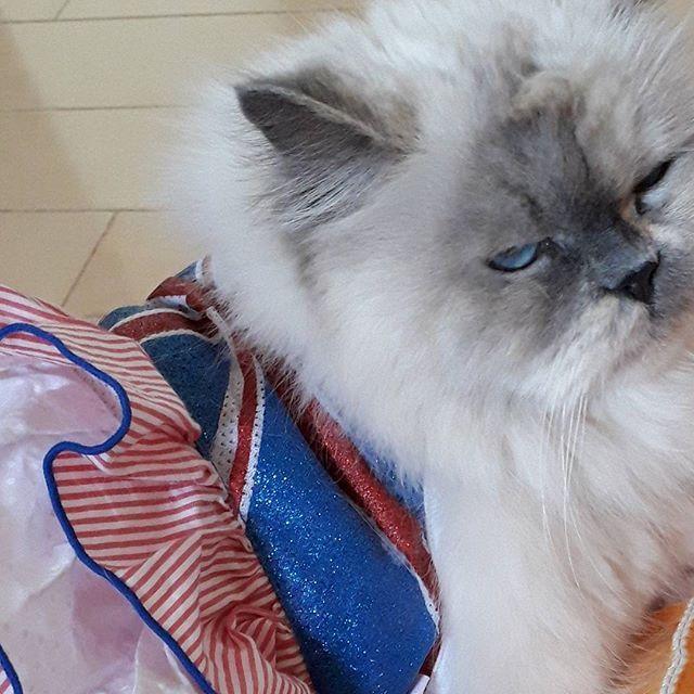 ストレスの発散方法って、それぞれだと思います。 あまり、落ち込まないで。(^ー^) 自分を変えることは、出来ます。 自分を甘やかさなければ出来ます。(^ー^) 誰でもみんな、頑張っていると思って 明日からまた元気に頑張りましょうね。(^o^)/~~ #愛猫 #ヒマラヤン #ペット #猫 #ストレス #泣かないで #元気をだして #落ち込まないで #自分 #甘やかさない #出来る #頑張って #変われる #元気に #明日から #お客様 #カウンセリング #スピリチュアル美容カウンセラー #リンパエステ店 #齋藤知美