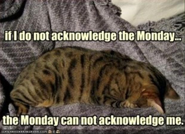 Funny Sayings About Mondays | funny monday pictures 1