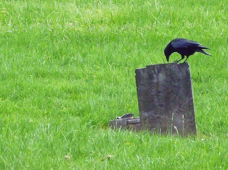 UN SEGUNDO SOBRE LA RETINA : LEICESTER, cementerio de Welford Road