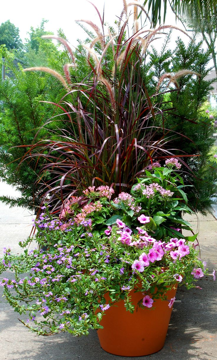 79 Best Images About Fountain Grass Container On Pinterest