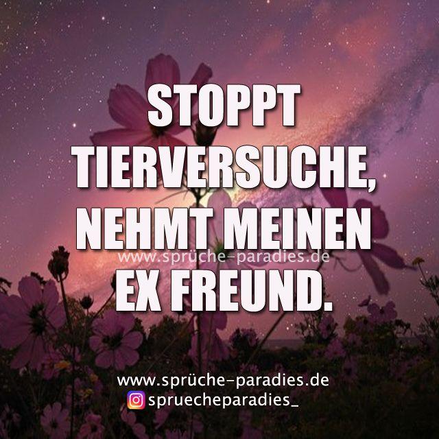 Ex Freund Diss Sprüche Ex Freundin Sprüche 2019 09 30