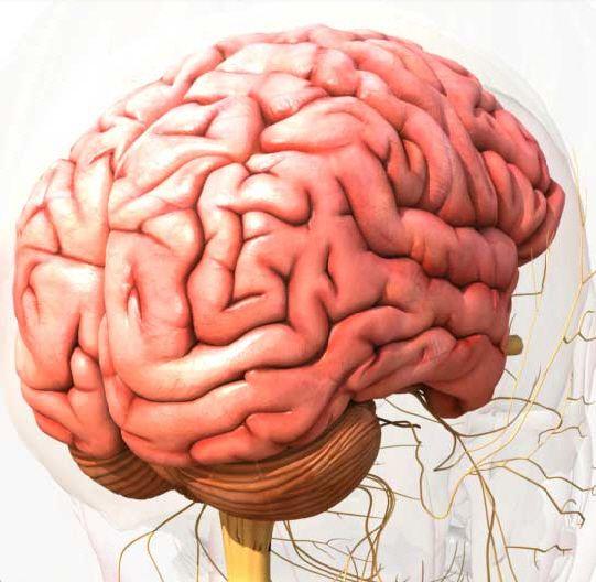 360 degrees anatomy website