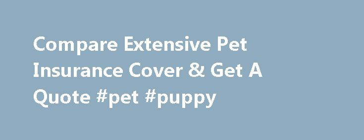 Compare Extensive Pet Insurance Cover & Get A Quote #pet #puppy http://pet.remmont.com/compare-extensive-pet-insurance-cover-get-a-quote-pet-puppy/  Health » Get Free Pet Insurance Quotes More About Pet Insurance Your animals are more than just pets – they're part of your family, too. Hippo.co.za now also helps your four-legged friends with extensive pet insurance quotes. This product assists financially when for example your beloved pet is involved in an accident or has fallen ill. Get…