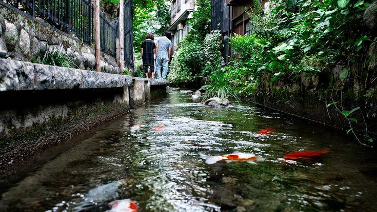 koi at a stream in Gujo Hachiman