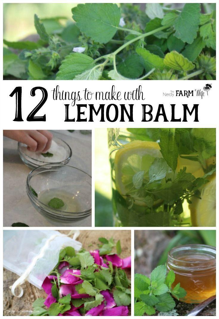 12 Things To Do With Lemon Balm Herb Gardening Lemon