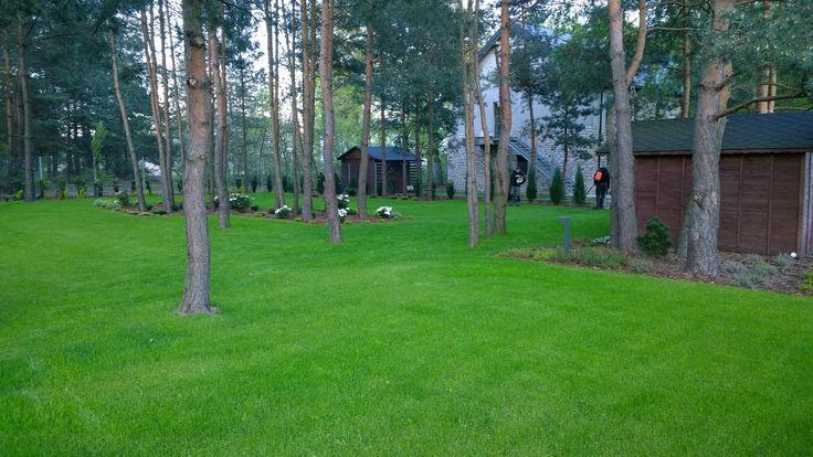Trawnik na leśnej działce.
