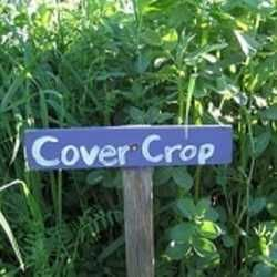 Cover crops are grasses, legumes or small grains grown between regular crop production for the purpose of protecting and improving the soil. Green manures are plants that are sown specifically to i...