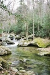 Boone cabin rental - Beech Creek Flowing Past the Old Fisherman's Cabin