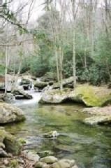 Boone cabin rental - Beech Creek Flowing Past the Old Fisherman's Cabin