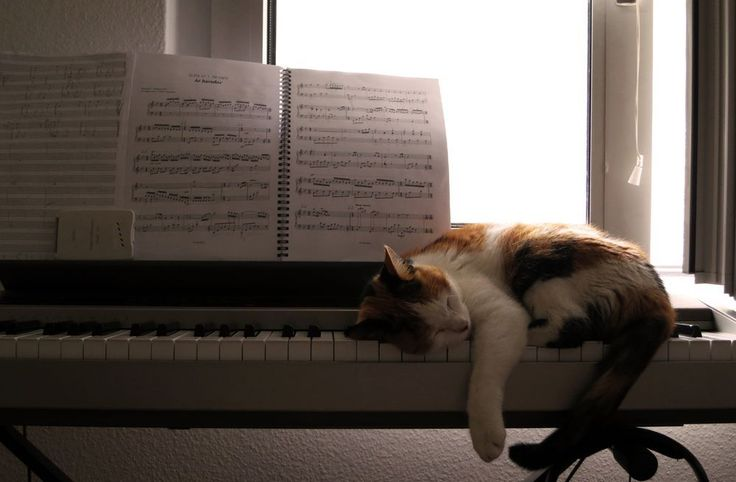 Jazz cat Photo by Alissa Deschamps — National Geographic Your Shot