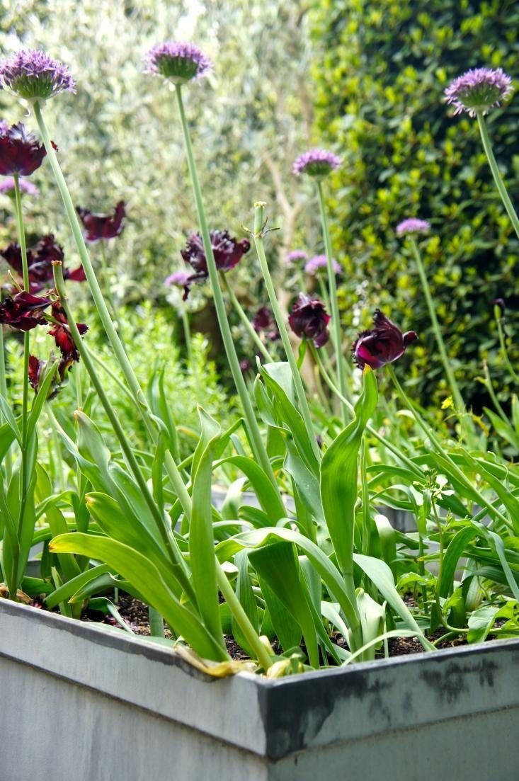 727 best garden images on pinterest garden ideas gardens and