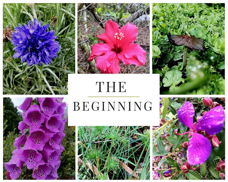 The day I started to see beauty in my own yard, changed my perspective on life.