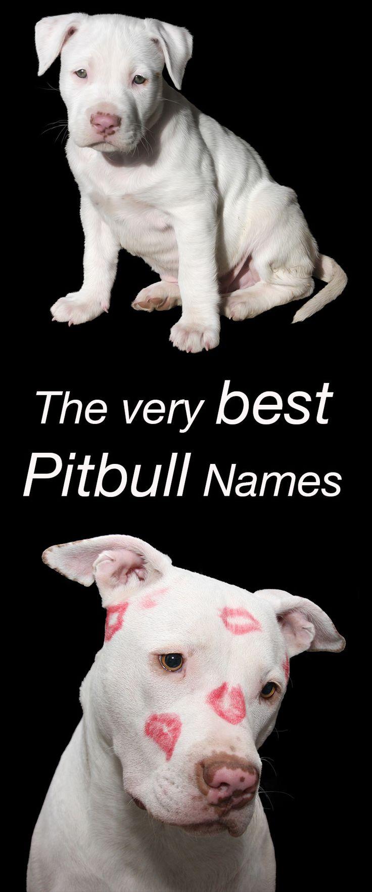 Best 25 Pitbull names ideas on Pinterest