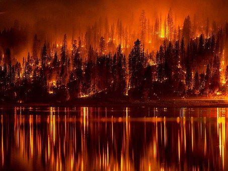 Erdőtűz, Láng, Égő, Víz, Reflection