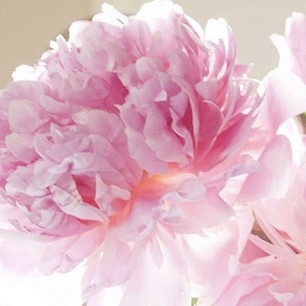 {peonies}Pink Flower, Colors, Beautiful, Lights Show, Deep South, Crafts Painting, Blossoms, Pink Peonies, Heavens