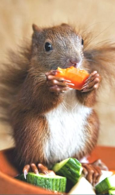 Classy, squirrel. Classy. Standing on your salad lends a certain cachet to your…