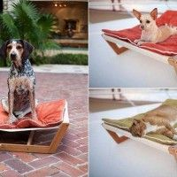 Poezen en honden, ze vinden het geweldig als ze eenmaal aan een hangmat zijn gewend.