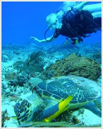 Cozumel is a world-class dive site, its reefs offer extraordinay flora and marine life, without a doubt is the magnificient coral mountains which makes these dives so popular, you dive through giant canyons of coral that drop to the depths of the ocean