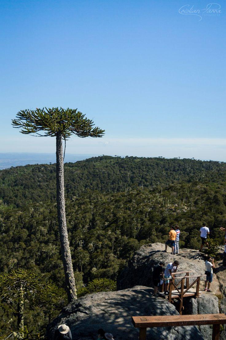 Piedra del Águila, Parque Nacional Nahuelbuta,Angol - Chile
