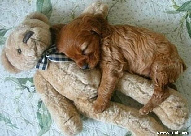 Peluş Oyuncaklarla Uyuyan Yavru Köpekler