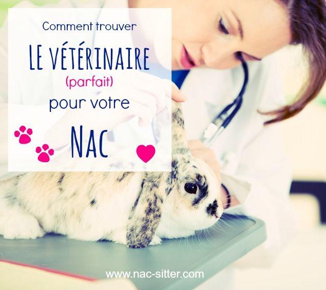 Comment trouver LE vétérinaire parfait pour votre Nac #veterinaire #nac #rongeur