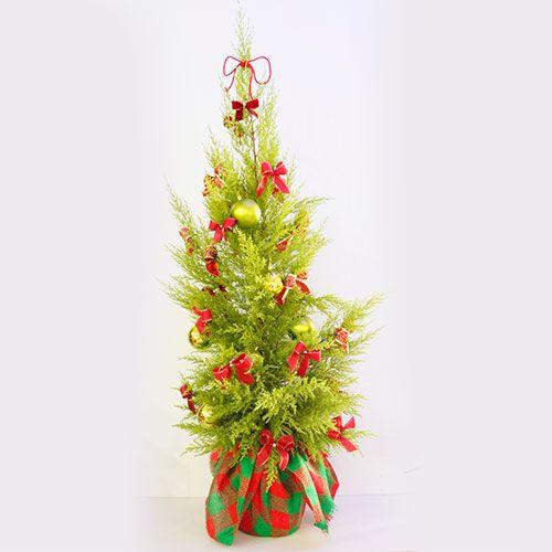 Árvore de Natal - Pinheiro Natalino :: Batista Reis - Flores Online