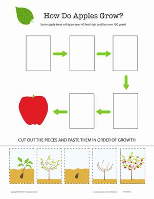 Second Grade Life Science Worksheets: How Does It Grow? Apple Tree