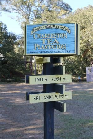 What a wonderful hidden gem near Charleston, SC. Definitely worth the drive out and definitely worth the $10 for the trolley tour. You are driven around the fields along with being taught about the tea which is surprisingly interesting! Would be great for people and kids of all ages and you get free tea! Score! Wonderful little place.