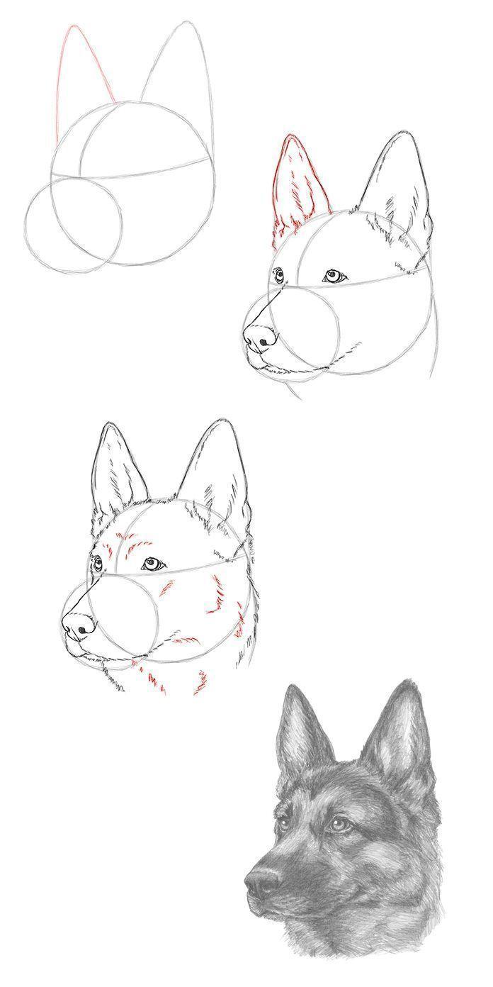Pin by Kira on Cute animal drawings   Dog drawing tutorial, Dog ...