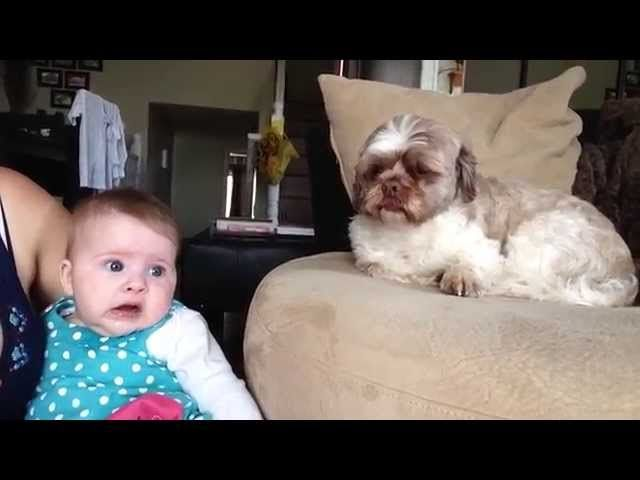 An adorable video of a baby and a dog exchanging 'words'.