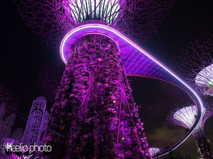 Its almost been a year since my visit to Singapore how this year has flown by.  #singapore #supertree #skywalk #nightsky #lightshow #lightscape #travel #travelasia #nightphotography #night #purple #lookingup @suelngray