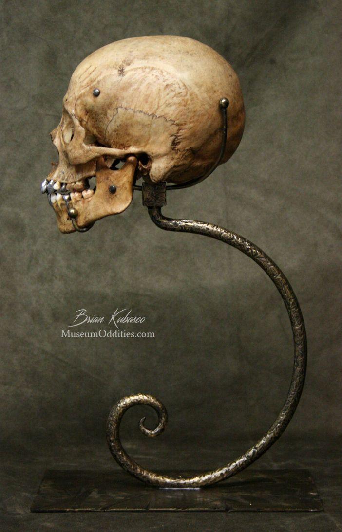 The 13 best skulls- art reference images on Pinterest   Anatomy ...