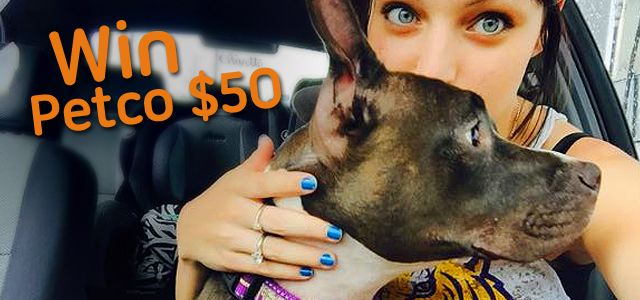Prize: $50 voucher in PETCO   Theme: Selfie With Your Pet