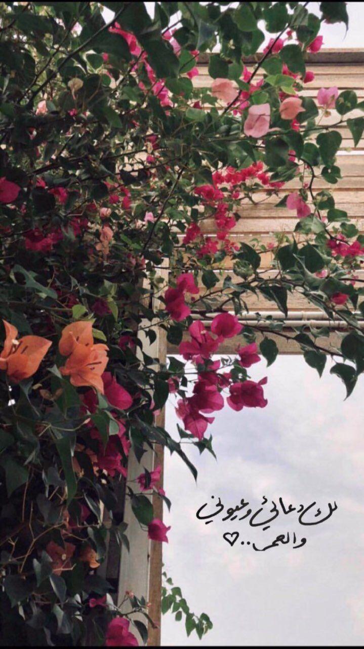 سناب سناب تصوير تصوير سنابات سنابات اقتباسات اقتباسات قهوة قهوة قهوه قهوه صباح صباح Arabic Quotes Beautiful Arabic Words Arabic Love Quotes