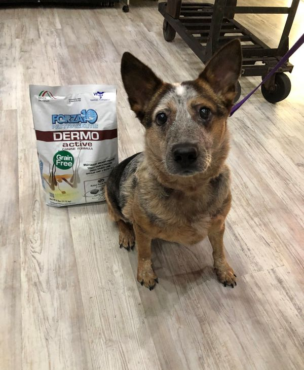 #CleanIngredients  Before and After review after using Dermo Active #dogs #cats