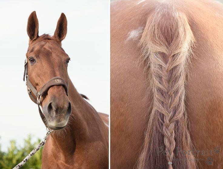 Paardenfotografie Lekkerkerk - Dier & Baasje fotoshoot paarden Miranda en Angel-1