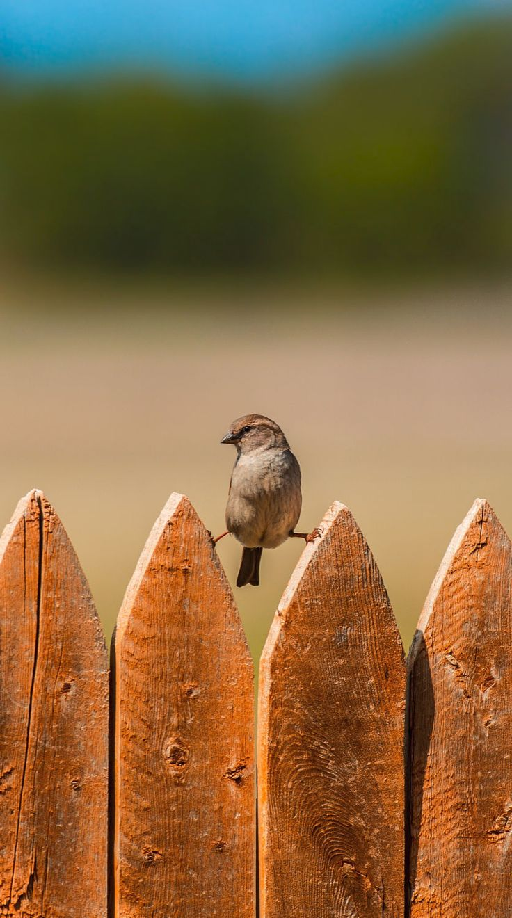 Bird on a fence  HD Wallpaper From Gallsource.com