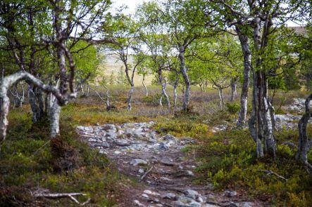 Hetta- Pallas hike, the second part of the story. Pyhäkero mountain  #hettapallas #hiking #finland #visitfinland #rinkkaputki