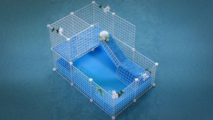 Build Guinea Pig Cage | What the Proper Cage Size for Guinea Pigs? - Guinea Pig Today