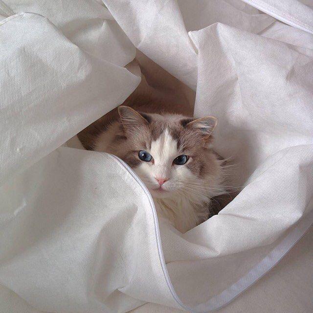 Cuddled up  #cateyes #bestfriends #catstagram #gato #cat #instapets #catsofinstagram #catlover #instacats #happy #catlife #textgram #sexycurve #kitty #pose #lifestyle