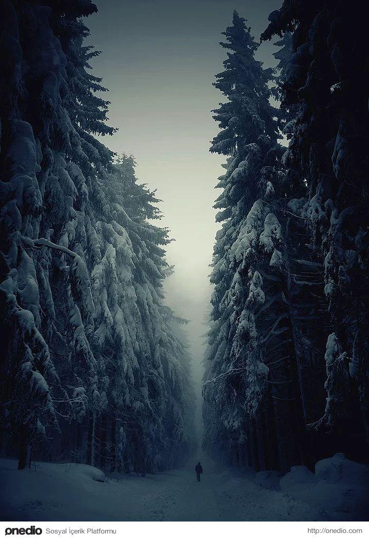 Kış aylarında orman yolu, Çek Cumhuriyeti