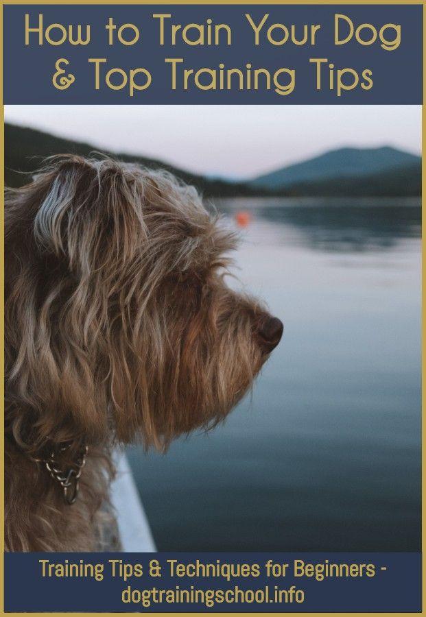 Dog Training Marston Moretaine With Images Dog Training Methods Dog Training Classes Training Your Dog