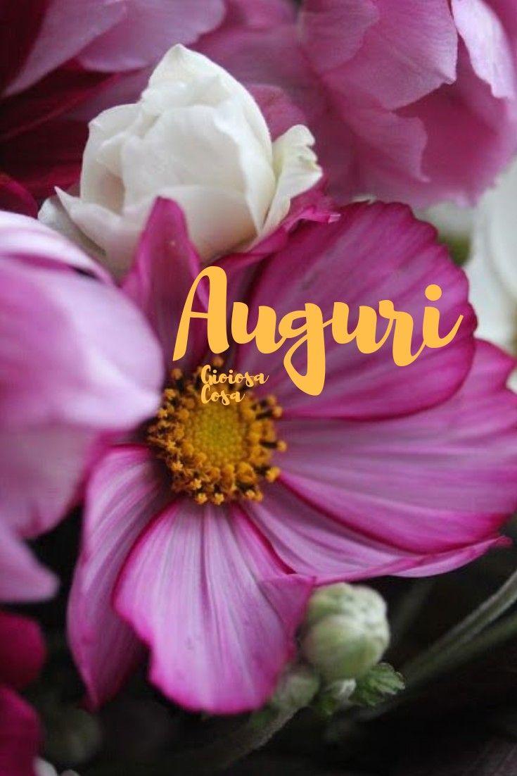 Auguri Fiori Colorati Bellissimi Rosa Fucsia Congratulazioni