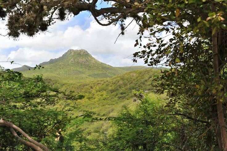 Why we love Curacao? Because of the beautiful nature like our Christoffelpark. A great place for a hike, admiring the local flora and fauna or 'climbing' Christoffel Mountain for a fantastic island view!