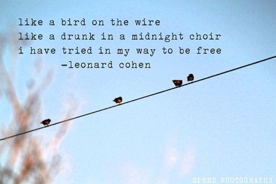 Like a Bird on the Wire - fine art print 8 x 12 bird nature photography life quote leonard cohen inspiration on Etsy, $12.00
