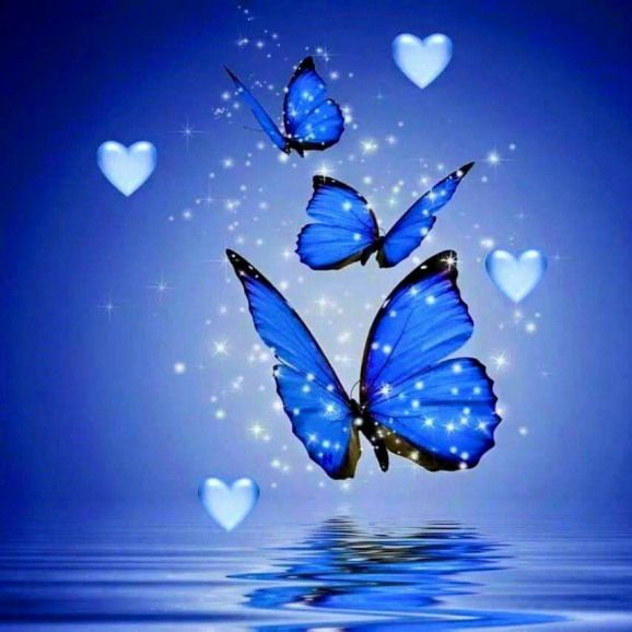 Drok Griefquotes Grief Quotes Boyfriend Butterfly Wallpaper Whatsapp Dp Images Butterfly Pictures Butterfly images hd wallpaper download