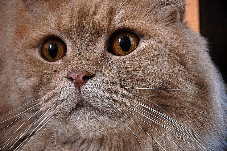 """""""Vykulená kočka"""""""