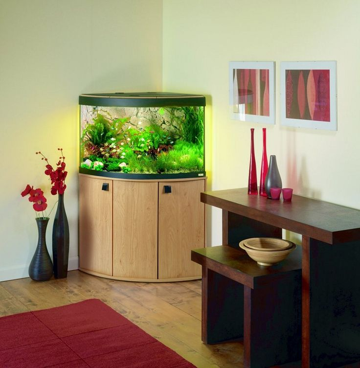 creative inspiration beautiful aquariums for home. Small Modern Fish Tank Pictures 146 best Aquarium images on Pinterest  Aquascaping aquariums